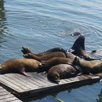 The most sea lions city