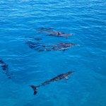Dolphin trip