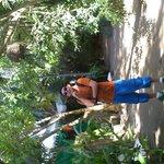 Bungalows dentro de un ambiente tropical