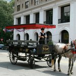 Horse drawn carriage in Savannah's historic district