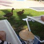 Go away ducks!!!