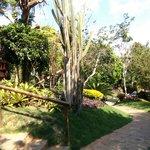 Caminhos para os chalés - jardins