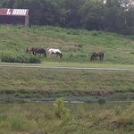 horses out back