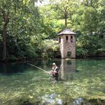 Wonderful, clear, cold spring water that grows fabulous Rainbow Trout!!