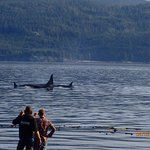 The most incredible morning!  Clay and Bender filming the Orcas.