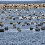 An oyster farm produces shellfish for the local retail distributor