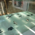 Baby turtles being looked after by the conservation project