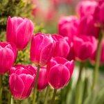 Herald Flowers