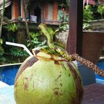 poolside coconut :)