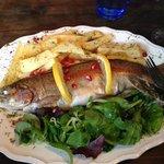 My Yummy Fish Main.