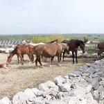 Eine Herde von 14 Pferden gehört ebenfalls zum Bauernhof