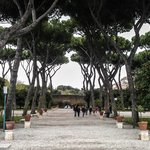 The park with orange trees