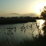 Paix vespérale autour de l'étang