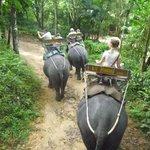 elephant treking