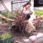 Gabi's Gartengestaltung