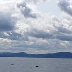 Whales and Fjord