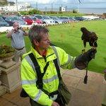 Hawk operator to deter seagulls