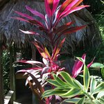 les plantes magnifiques et luxuriantes à l'entrée d'une douche privée