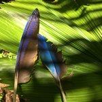 plumes de perroquets trouvées sur le parcours