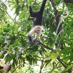 And Monkeys!