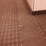 Litter in hallways