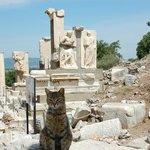 A cat at Ephesus