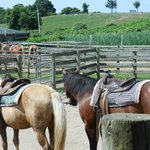 Deep Hollow Ranch Horseback riding includes beach, short drive from hotel
