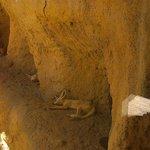 Los zorrillos del desierto