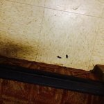 Example of cockroaches in stairwell