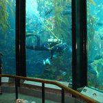 view of aquarium