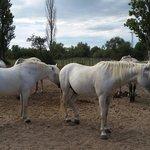 Les chevaux sublimes