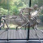 le mur des squelettes..... incroyable