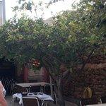 Der riesige Zitronenbaum