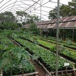 miles de plantas de café