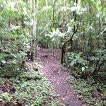 Senderos del Bosque