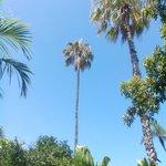 De nombreux palmiers de tous les pays du monde