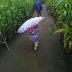 The Maize Maze