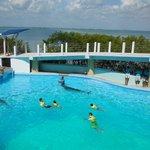 activité , aquarium, les dauphins, au centre d achat la Isla