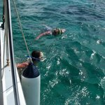 Snorkeling with sharks and stingrays