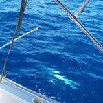 Reeling in a Barracuda