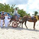 horse & carriage to beach