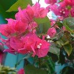 beatiful flowers on deck