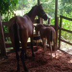 Horseback riding available