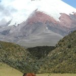 Wild horse grazing at the foot of VOLCANO COTOPAXI.