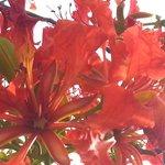 great foliage