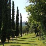 Cipressen en zicht op de torens van San-Gimignano