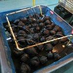 Cocos encontrados no Lord Clive