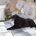 An Athenian Dog