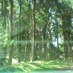Pine trees all around