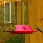 Hummingbirds on the veranda